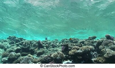 Waves of Sea Over the Coral Reef