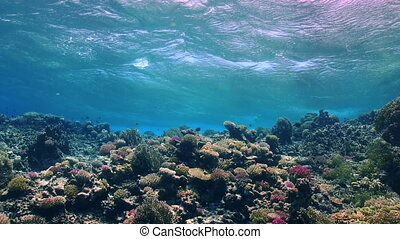 Waves of the sea over the coral reef, view from underwater