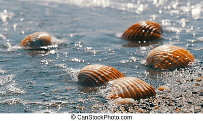 Waves wash over four different shells on beach and washes...