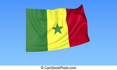 Waving flag of Senegal, seamless loop. Exact size, blue...