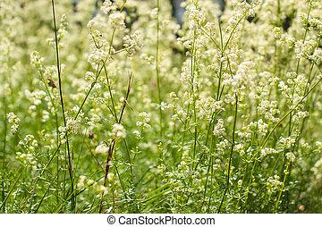 Waving grass field blowing in the wind