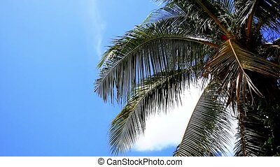 Waving Tropic Palm Tree in the Blue Sunny Sky. Speed up.