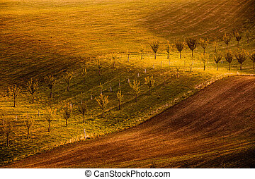 Wavy brown landscape in Moravian Tuscany