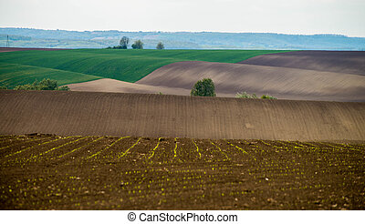 Wavy cultivated land in the countryside
