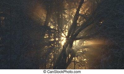 Wavy light mystical forest close