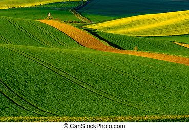 Wavy meadows spring landscape in South Moravia, Czech...