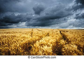 Wavy Wheat Fields