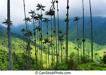 Wax Palm Trees