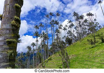 Wax Palms and Blue Sky