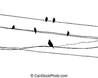 waxwings, fil, oiseaux