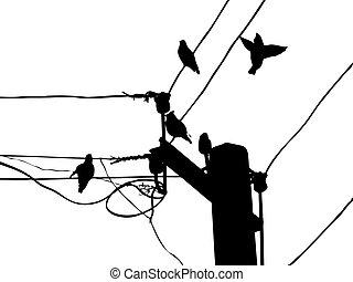 waxwings, oiseaux, vecteur, fil, silhouette