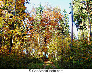 Way in a autumn forest