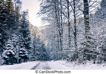 way in winter forest