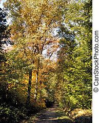 Way through a autumn forest-1