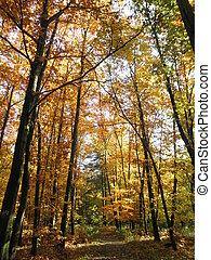Way through a autumn forest-2