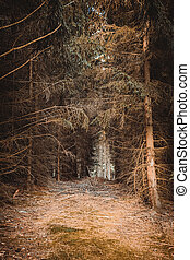 a dark coniferous forest in autumn