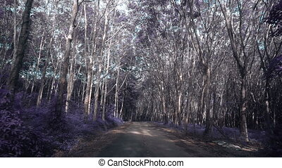 Way through beautiful magical forest