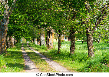 Way to an old farmhouse on the island Oeland, Sweden
