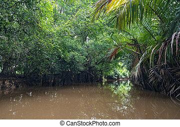 Way to Kayaking at Klong Sung Nae, Thailand's Little Amazon....