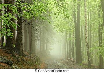 wcześnie, ścieżka, przez, las, wiosna