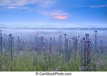 wcześnie, błękitny, mglisty, rano