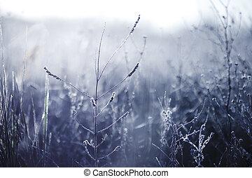 wcześnie rano, mrożony, szron, roślina, w, wcześnie, jesień, morning., mroźny, rośliny, w ogrodzie, zbliżając, zima, time., piękny, zima, tło