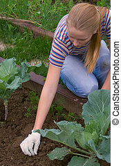 Weеding a vegetable gard - Young pretty women weeding a bed