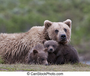 We see you - A trio of bears watching you. Taken in Alaska.
