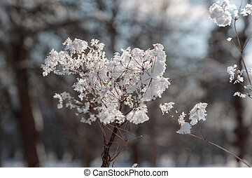 weak and dry branch of a plant with snow