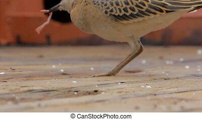 Weakened bird flight sea and sat on deck of ship. - Weakened...