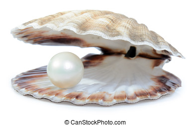 wealthy pearl - finding a nice surprise a pearl in a shell...