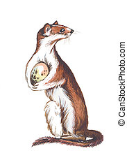 Weasel with stolen bird's egg