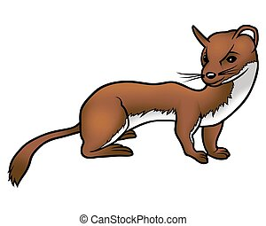 Weasel 02 - High detailed and coloured cartoon illustration