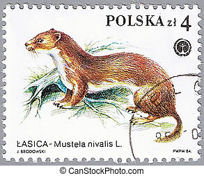 Weasel - POLAND - CIRCA 1984: A stamp printed in Poland...
