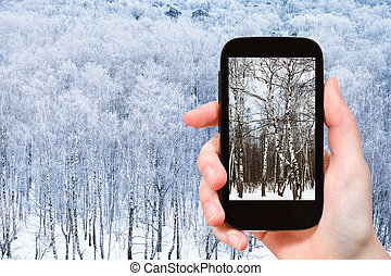 photo of birch trees in frozen forest in winter