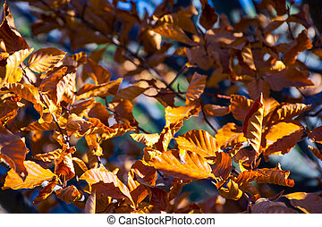 weathered brown foliage on the branches