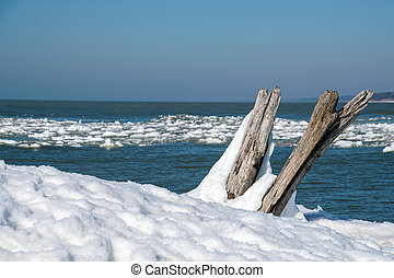 driftwood logs in snow