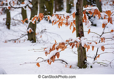weathered foliage in snowy forest. beautiful winter nature...
