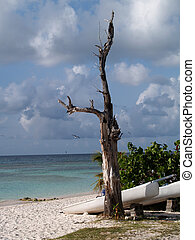 Weathered Tree Long Bay Antigua