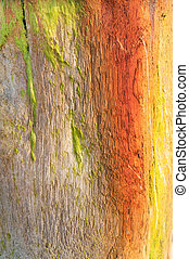 Weathered Wood Beach Post Background Texture