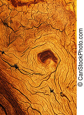 weathered and contorted wood grain from a mountain pine tree