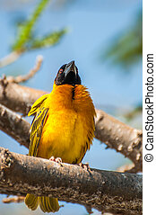 Weaver bird perched on a branch