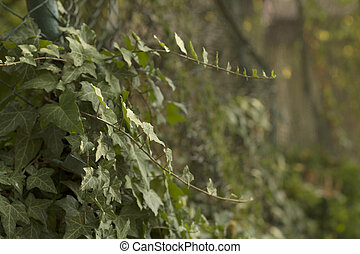 Weaving green near the fence