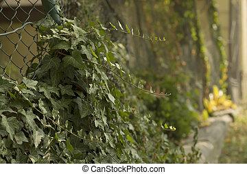 Weaving plants near the fence
