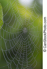 web, diamant