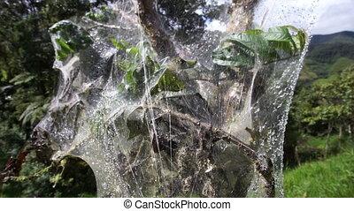 Web Entangled Tree Dolly Along