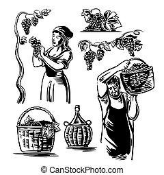 web, manifesto, vendemmia, uomini, illustrazione, vineyard., vettore, uva nera, icona, etichetta, bianco, donne, raccogliere, design.