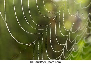 web, mit, tropfen, von, wasser, closeup
