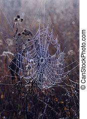 web, morgen