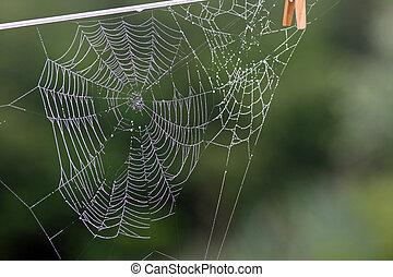 web, morgen, spinne, tau